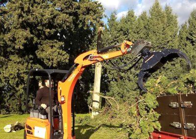 Nettoyage des branches d'un cyprès suite à une journée d'élagage en Drôme