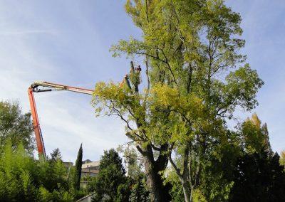 Élagage et abattage difficile d'un peuplier effectué avec l'aide d'une nacelle , en Drôme