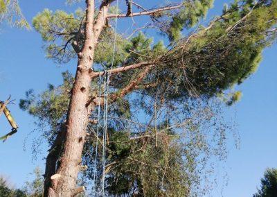 Élagage difficile d'un arbre chez des particuliers par en Grimpant dans l'arbre