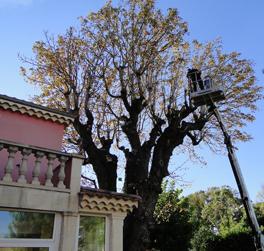Élagueur Drôme Montélimar