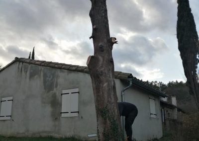 Abattage d'un arbre en Drôme chez un particulier