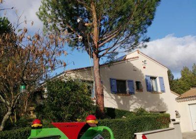 Élagage difficile d'un pin par en Grimpant dans l'arbre pour un particulier en Drôme
