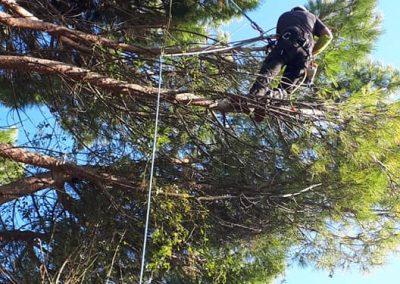 Élagage de voltige de pins en Drôme pour un particulier