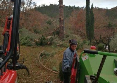 Nettoyage et broyage de pins suite à élagage et abattage en Drôme