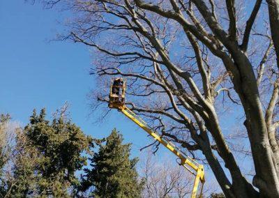 Élagage difficile d'un mococoulier par en Grimpant dans l'arbre