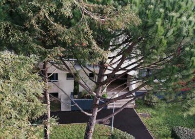 Entretien des arbres et espace vert d'une collectivité par En Grimpant dans l'arbre