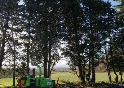 Élagage d'arbres en Drôme par en grimpant dans l'arbre