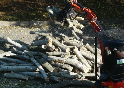 Nettoyage d'un chantier abattage par en grimpant dans l'arbre