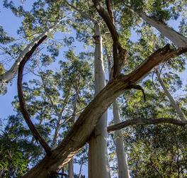 Travaux d'urgence nécessitant l'abattage d'un arbre en Drôme