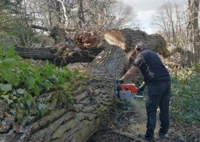 Tronçonnage et débitage d'un arbre par les élageurs d'En Grimpant dans l'arbre
